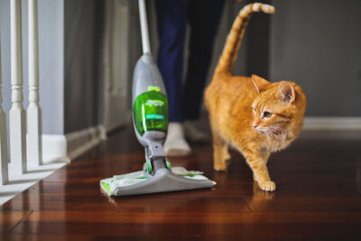 Our Cat Adoption Story + Swiffer Dry Refills