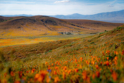 Antelope Valley California Poppy Reserve + 11 Best Places to See California Wildflowers in Southern California