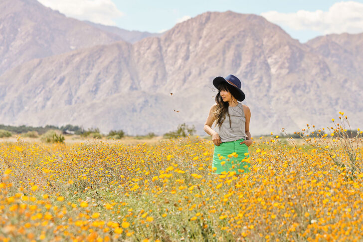 Anza Borrego Super Bloom + Best Places to Find California Wildflowers in Socal