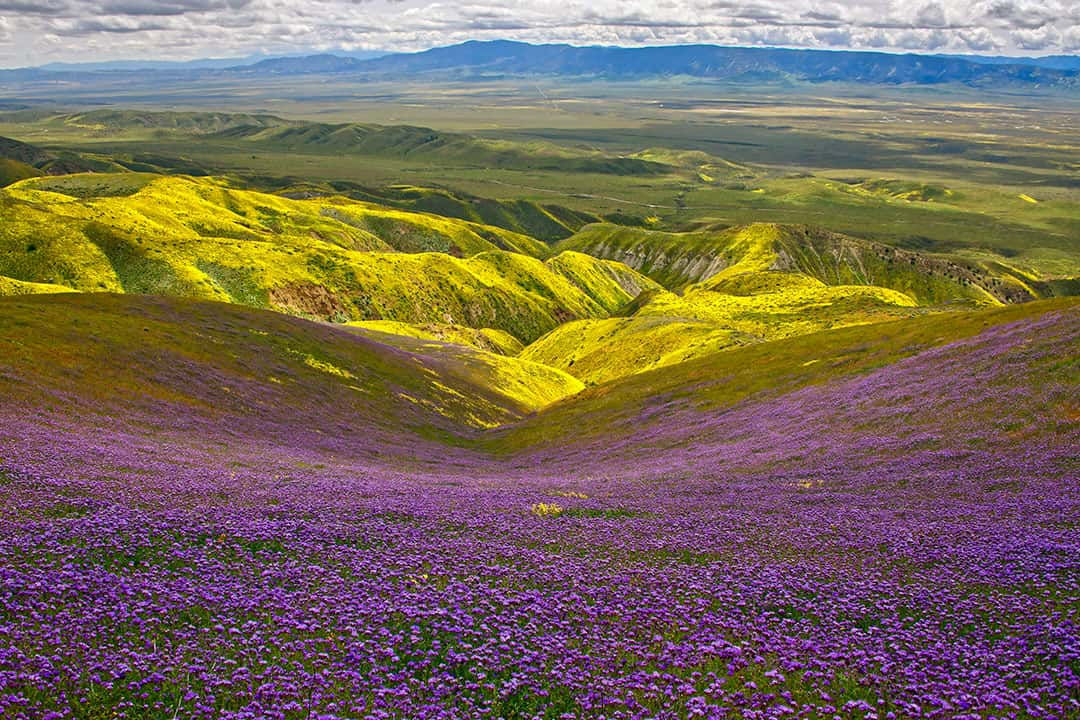 Carrizo Plain National Monument + When and Where to See California Wildflowers in Socal