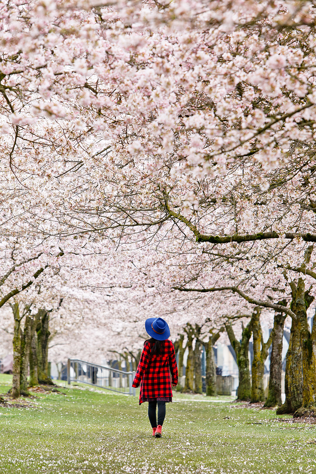 Japanese American Historical Plaza at Tom McCall Waterfront Park - Where and When to Find Portland Cherry Blossoms // Local Adventurer #pdx #oregon #cherryblossom