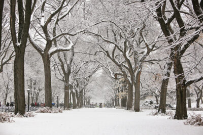 Snow in Central Park NYC