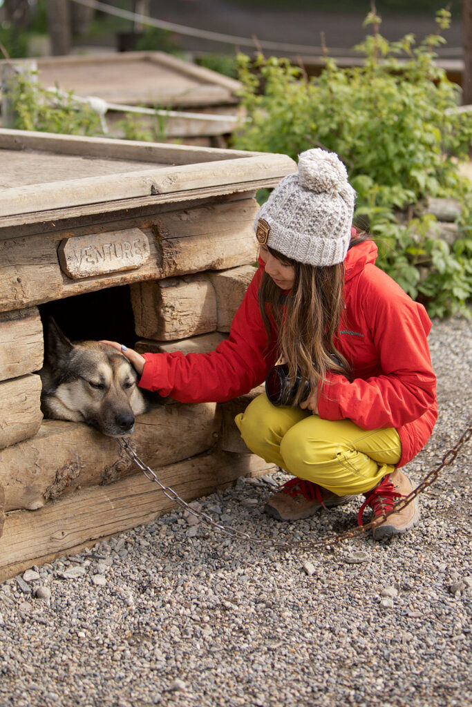 Meet the Canine Rangers at the Denali Kennels