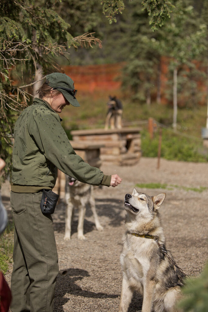 Meet the Canine Rangers at the Denali National Park Kennels