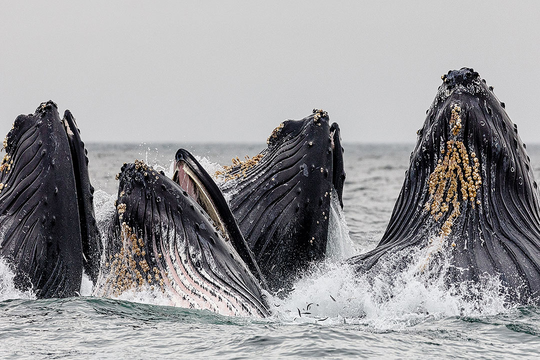 Monterey Bay Whale Watch + Best Places for Whale Watching Near Me