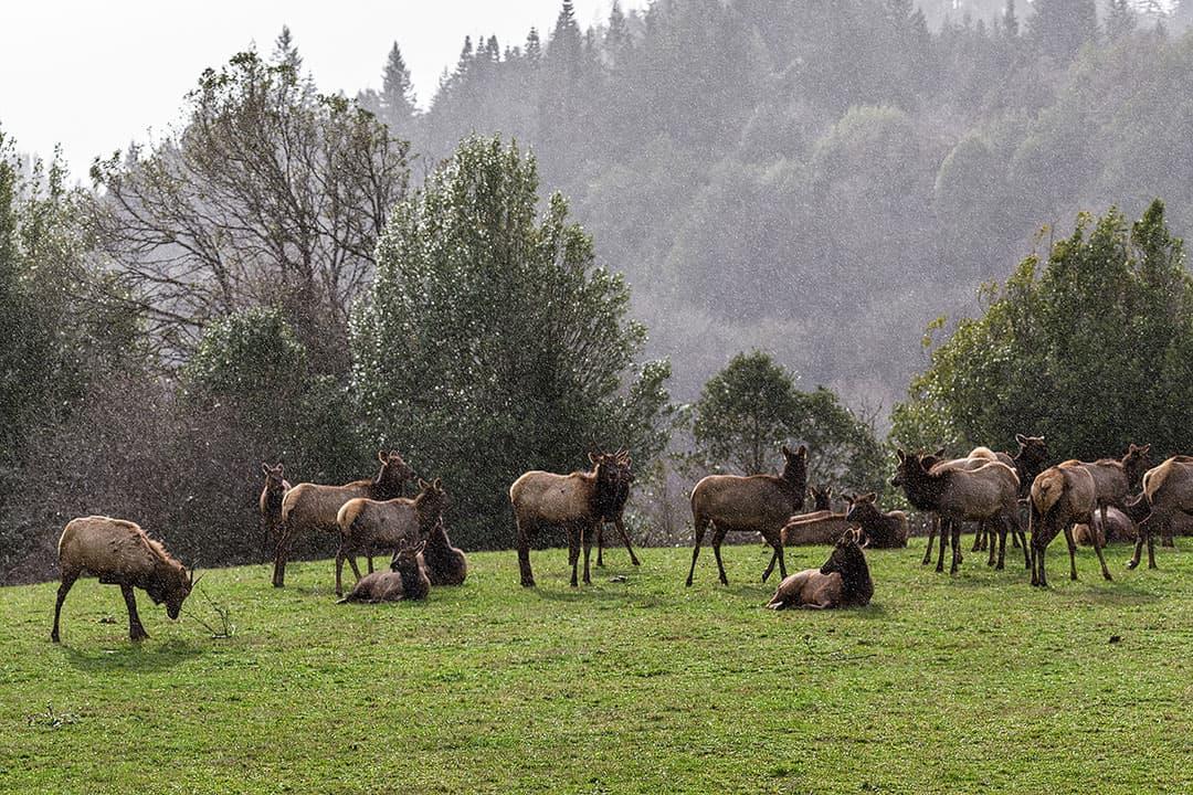 dean creek elk viewing area