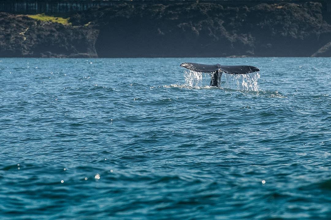 depoe bay whale watching