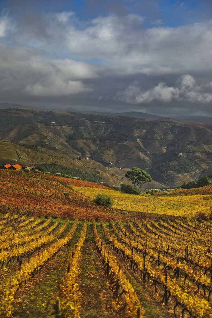 Douro Valley Wine Tour on Douro River Cruise
