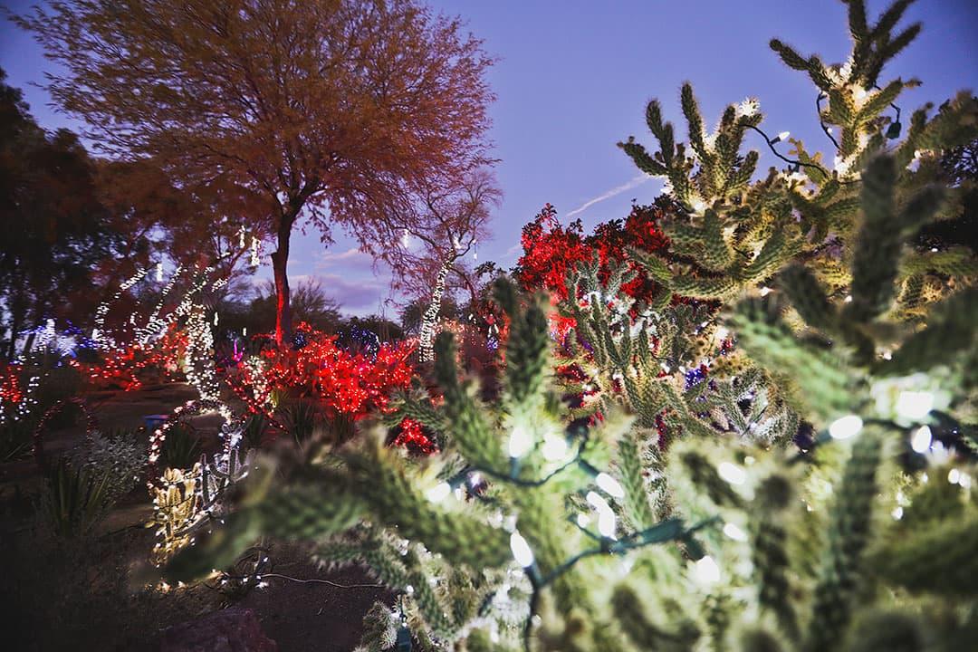 ethel m cactus garden lights