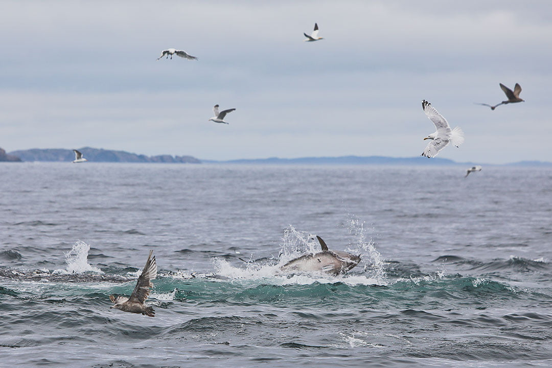 Whale Watching Tours Newfoundland and Labrador