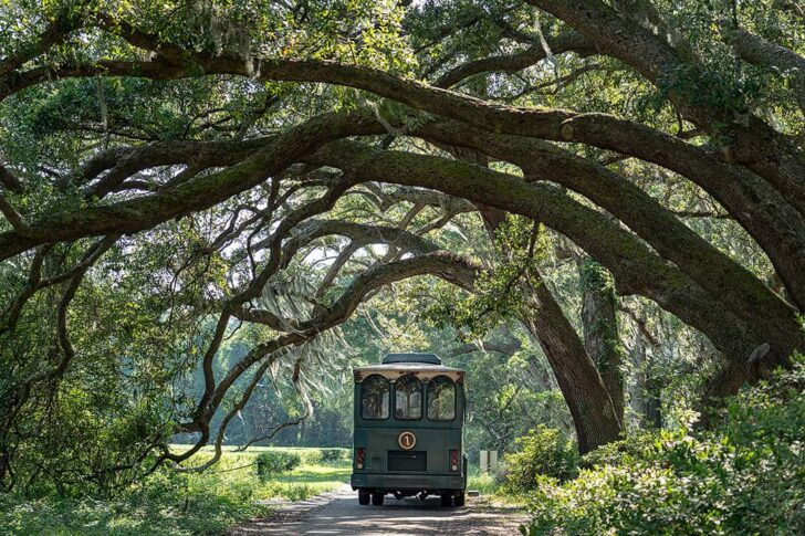 Charleston Tea Plantation + 25 Amazing Free Things to Do in Charleston SC