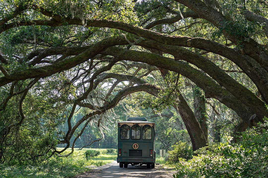 25 Free Things to Do in Charleston SC