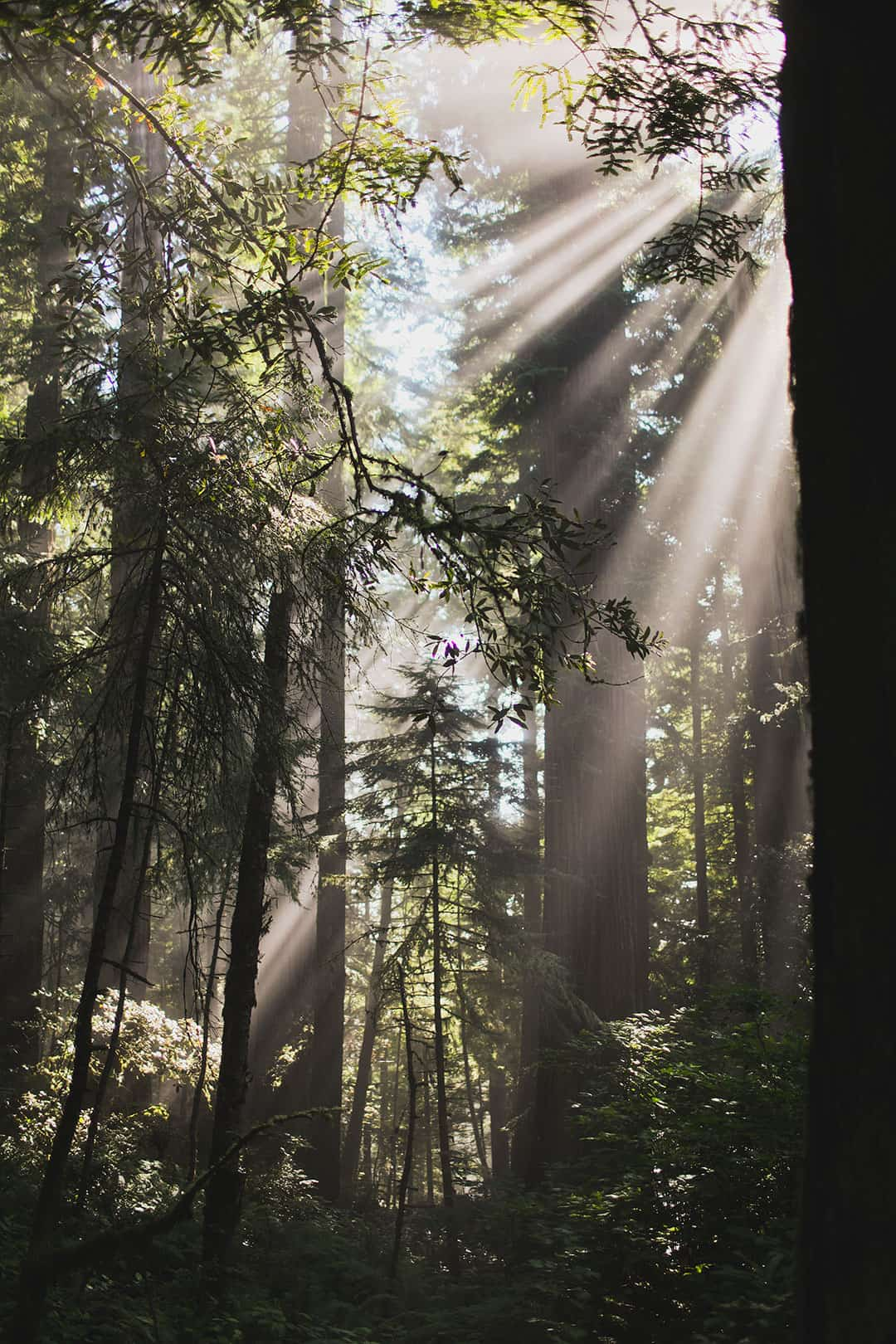 Redwood National Park - Least Visited National Park in US