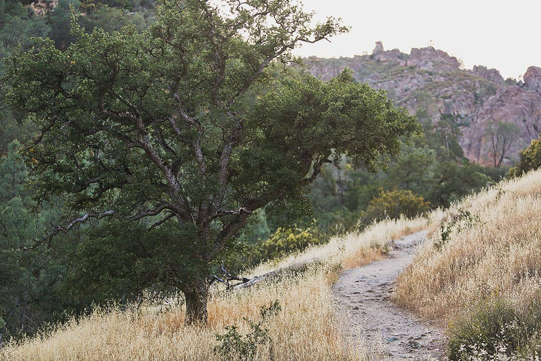 Pinnacles National Park Trails