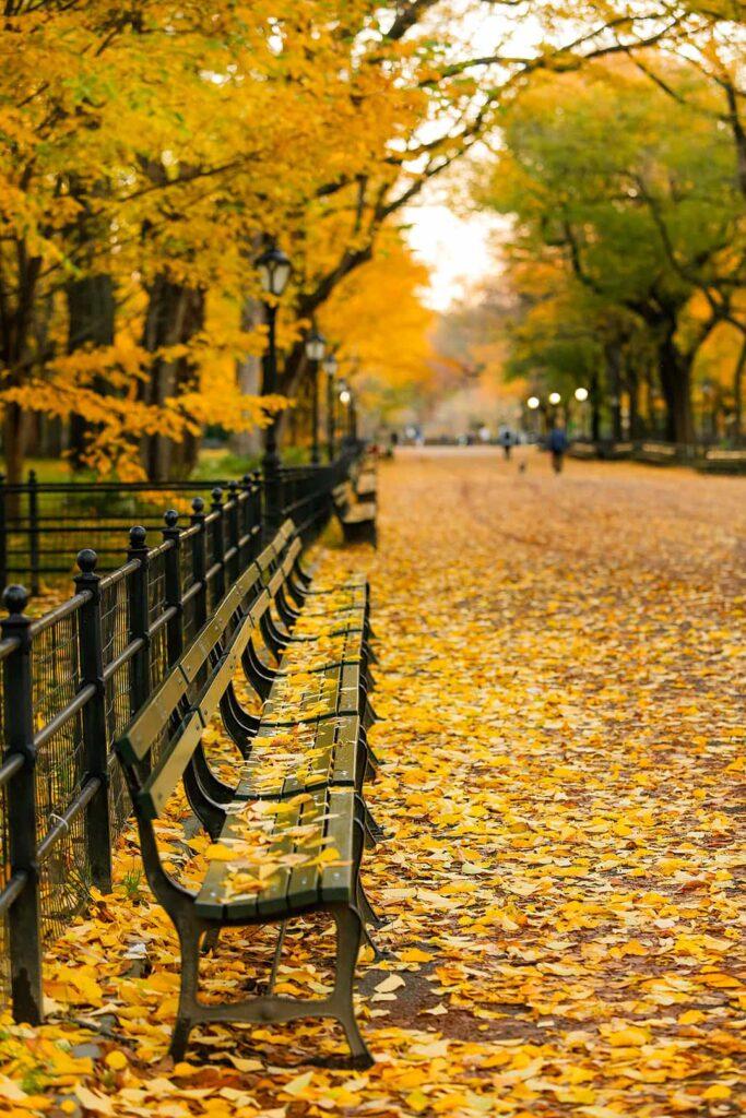 New York in November