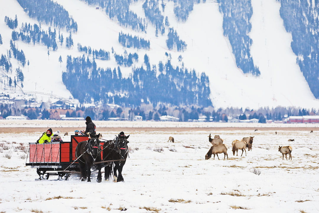11+ Unforgettable Things to Do in Jackson Hole Wyoming in the Winter