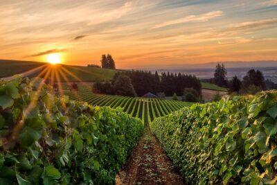 Willamette Valley Wine Tours