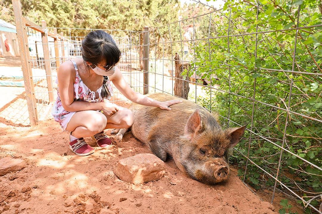 animals best friends kanab utah