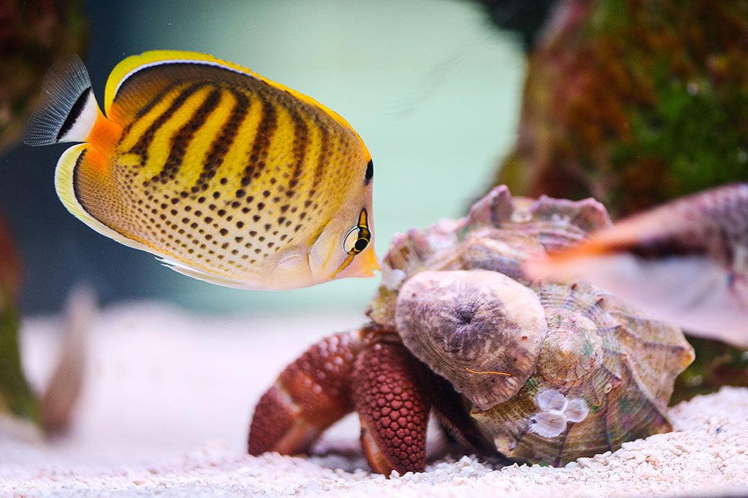 mote marine laboratory aquarium