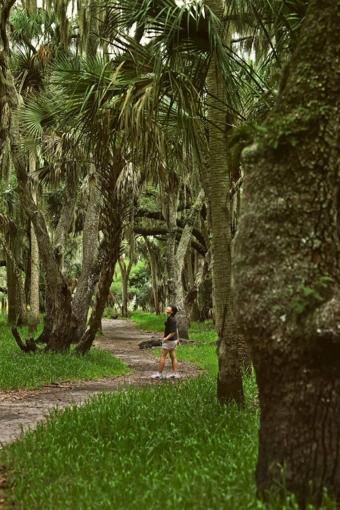 Myakka State Park FL + 7 Fun Things to Do in Sarasota FL for First Timers